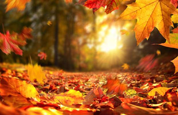 Live the autumn from 54€ hotel ilunion valencia 4